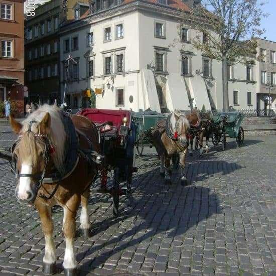 warschau-altstadt-pferde