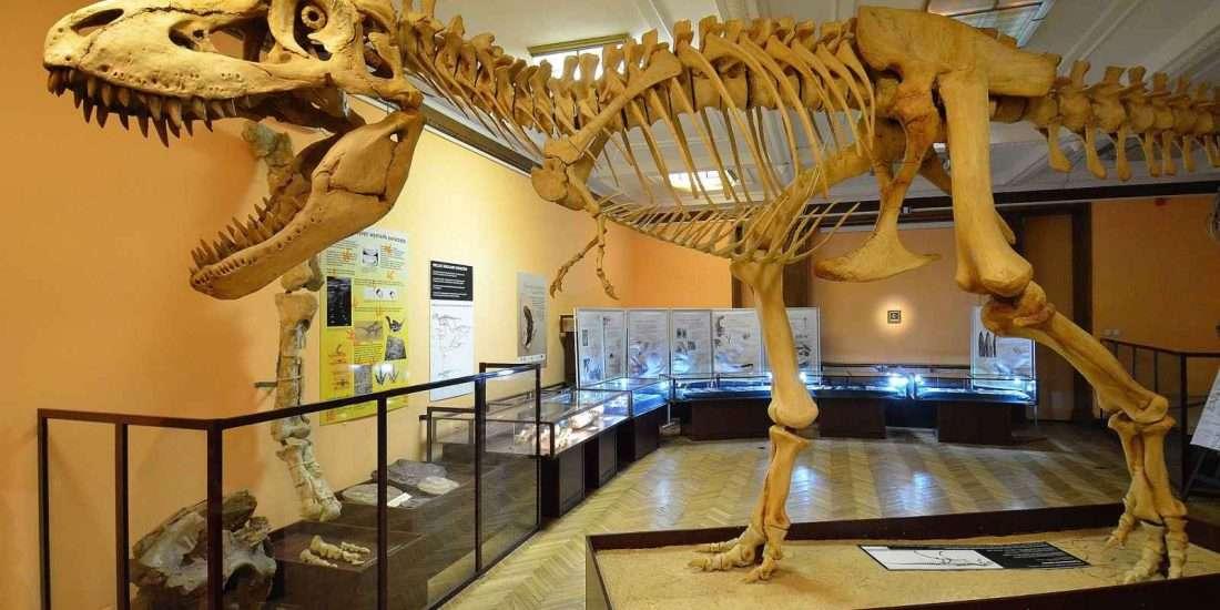 evolution-warschau-museum